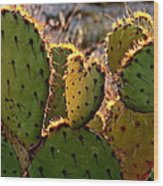 Cactus Heart In Sunset Wood Print
