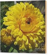Calendula Named Bon-bon Yellow Wood Print