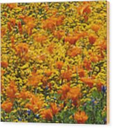 California Poppies And Goldfields Dance Wood Print