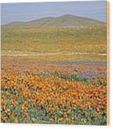 California Poppies Fill A Landscape Wood Print