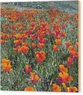 Californian Poppies (eschscholzia) Wood Print by Bob Gibbons