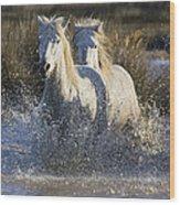 Camargue Horse Equus Caballus Group Wood Print