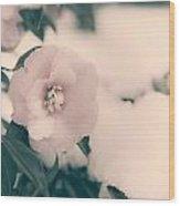 Camellia Wood Print by Joana Kruse