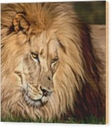 Cameron Wood Print by Big Cat Rescue