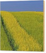 Canola Field, Darlington, Prince Edward Wood Print