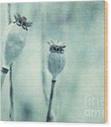 Capsule Series Wood Print by Priska Wettstein