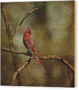 Cardinal IIi Wood Print