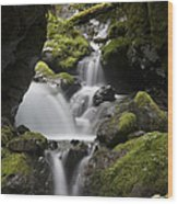 Cascading Creek In Temperate Rainforest Wood Print