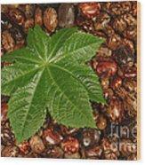 Castor Bean Leaf And Seeds Wood Print