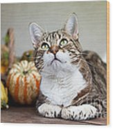 Cat And Pumpkins Wood Print