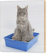 Cat Using Litter Tray Wood Print