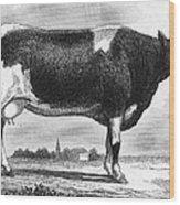 Cattle, 19th Century Wood Print