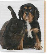 Cavalier King Charles Spaniel And Rabbit Wood Print
