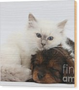 Cavapoo Pup And Blue-point Kitten Wood Print