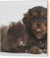 Cavapoo Pup And Shaggy Guinea Pig Wood Print
