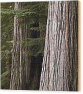 Cedar Trees, Whistler, British Columbia Wood Print