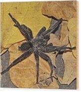 Chaetopelma Olivaceum Wood Print