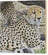 Cheetahs Resting Wood Print
