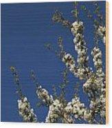 Cherry Blossom Wood Print
