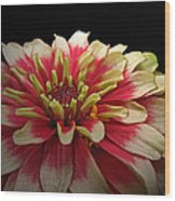 Cherry Vanilla Wood Print