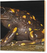 Chilean Mountains False Toad Wood Print