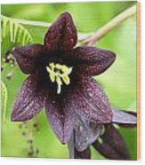 Chocolate Lilly Wood Print