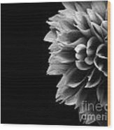 Chrysanthemum In Black And White Wood Print