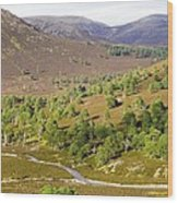 Cleared Scots Pine Forest Wood Print