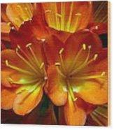 Clivia Bloom Wood Print