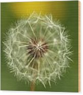 Close View Of A Dandelion Gone To Seed Wood Print
