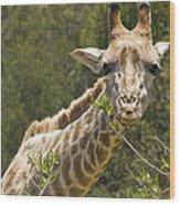 Close View Of A Giraffe Wood Print