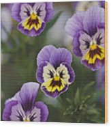 Close View Of Pansy Blossoms Wood Print