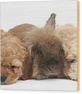Cockerpoo Puppies And Rabbit Wood Print