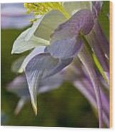 Colorado Blue Columbine At Lake Irwin Wood Print
