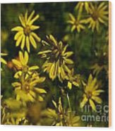 Colorado Sunflower Grouping Wood Print