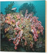 Colorful Reef Scene, Komodo, Indonesia Wood Print