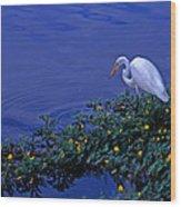 Common Egret Wood Print