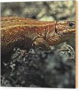 Common Lizard Wood Print