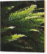 Common Polypody Wood Print