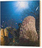 Coral And Sponge Reef, Belize Wood Print