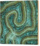 Coral Design Wood Print