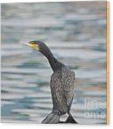 Cormorant Bird Wood Print
