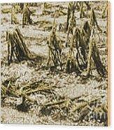 Cornfield After Hailstorm Wood Print