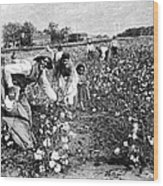 Cotton Industry, Early 20th Century Wood Print