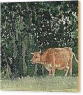 Cow In Pasture Wood Print