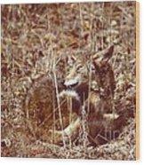 Coyote - American Prairie Wolf Wood Print