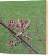 Crab Apple Tree Buds Wood Print
