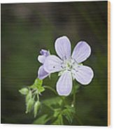 Cranesbill Wood Print