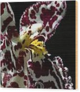 Cribet Exotic Orchids Wood Print by C Ribet