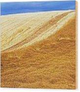 Crops, Oil Seed Rape Wood Print